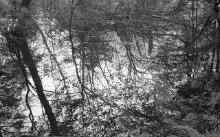 Thaddeus Holownia, <em> Near Wyman Meadow</em>, 2003, Toned silver gelatin contact print, 15.9 x 41.3 cm. Courtesy of the artist.